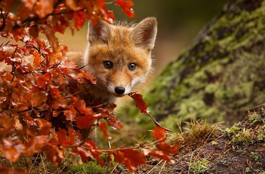 autumn-animals-wcth06