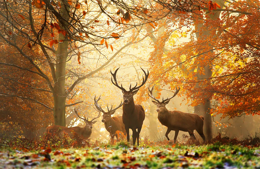 autumn-animals-wcth07