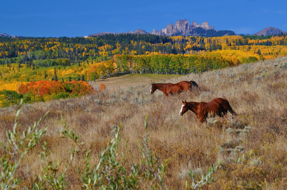Freedom-during-the-fall-horses-roaming-in-colorful-Colorado