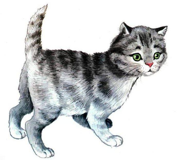 Детские рисунки кошки: Рисунок кошки цветными карандашами ...