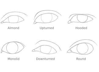 THUMBNAIL different eye shapes 324x235