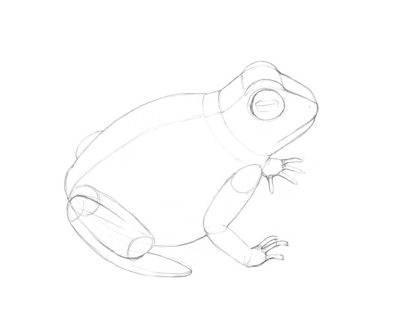 Rough sketch of the frog