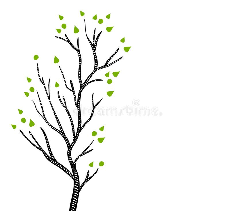 Black and white aspen or birch tree in spring with green leaves, vector. Illustration royalty free illustration