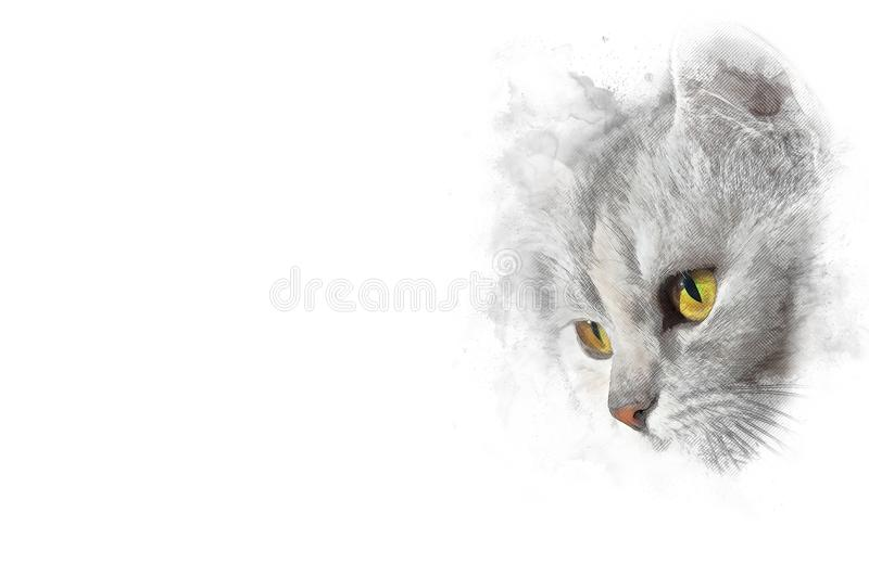 Cat color with orange eyes, stylized pencil drawing Isolated on white royalty free stock photos