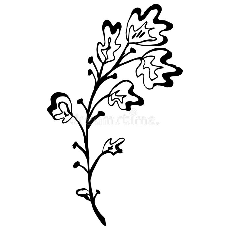 Engraved Vector Hand Drawn Illustrations Of Abstract Oak Branch Isolated on White. Hand Drawn Sketch of a Flower. vector illustration
