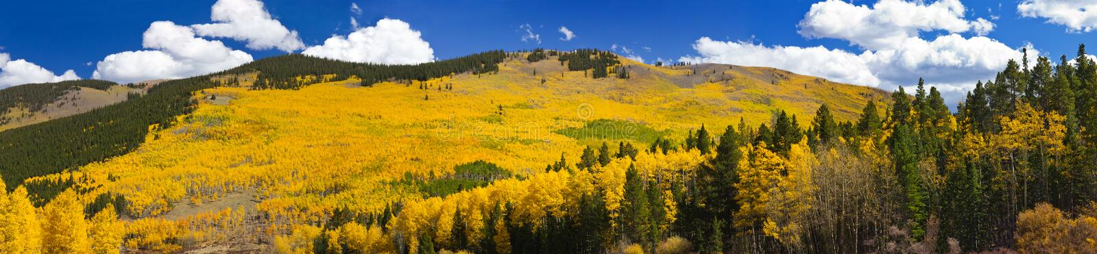 Fall Aspen Forest Panoramic Landscape. Panoramic view of massive aspen forest in the Colorado Rocky Mountains during Fall stock photo