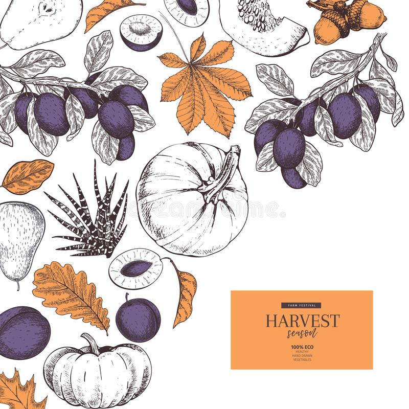 Hand drawn banner of autumn harvest fruits, vegetables. Vector vintage engraved style. Pumpkin, plum, oak, mapple. Chestnut leaves. Fall holiday flyer royalty free illustration