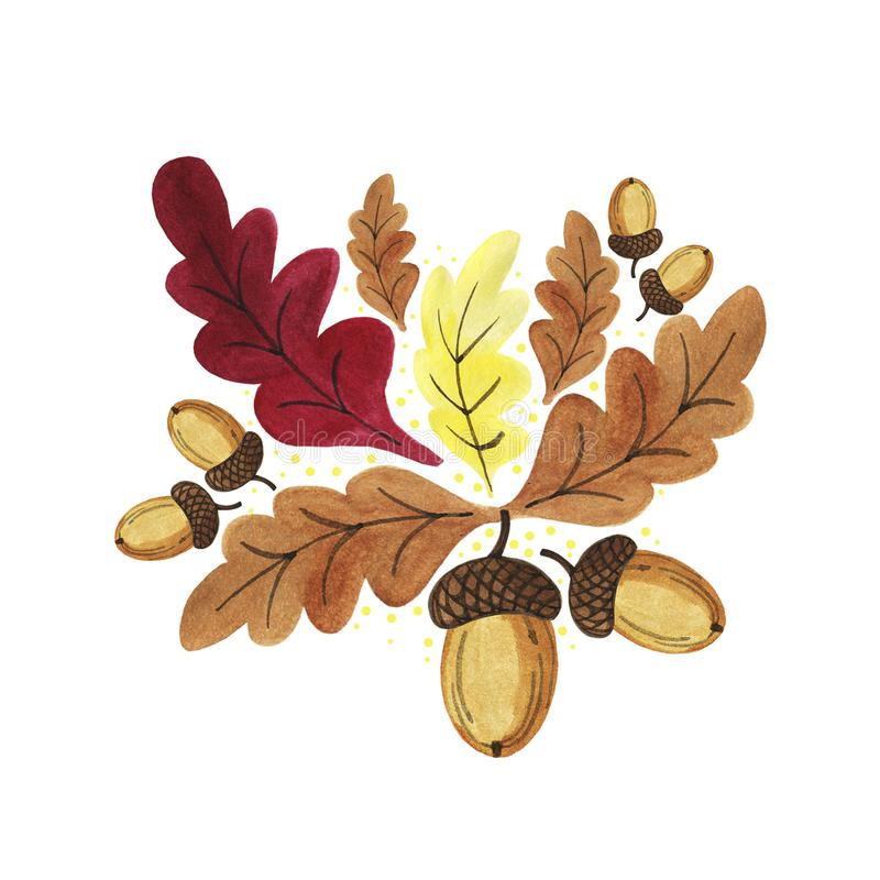 Hand drawn watercolor autumn oak brown,yellow, dark red leaves with acorns on the branches isolated on white background. Design for seasons greeting cards vector illustration