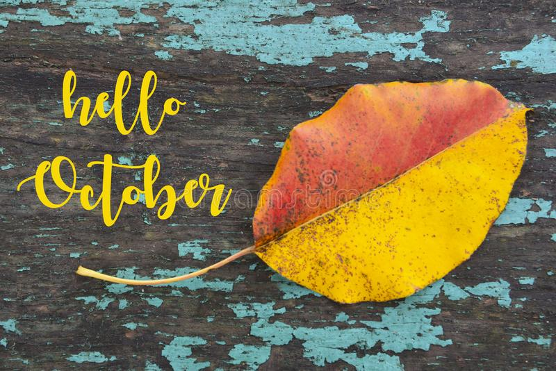 Hello October.Colorful aspen tree leaf on blue colored old wooden texture.Fall season concept. Selective focus stock photo