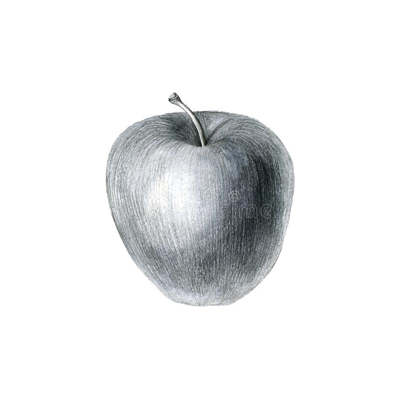 Pencil drawing apple stock images