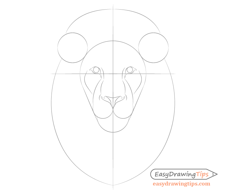 Lion facial features drawing