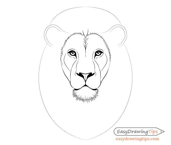 Lion inner mane and chin fur drawing